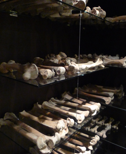 """Living collection"" display case of moa bones at Whanganui Regional Museum."